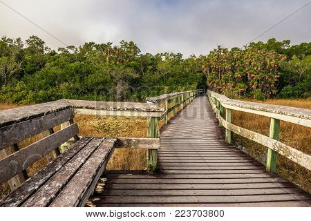 Bench on a raised wooden boardwalk in the wetlands of Everglades National Park, Florida
