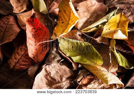Colorful Leaves for background or banner. Horizontall composition.