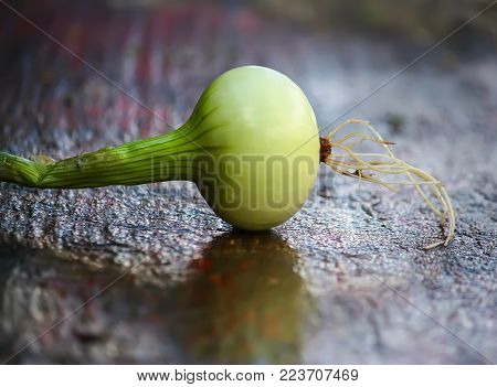 White raw peeled onion on wooden table.