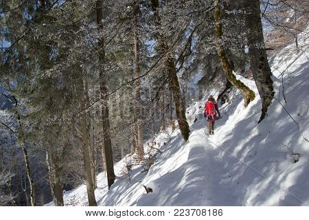 back view of tourist with backpack walking in snowy mountains near Neuschwanstein Castle, Germany