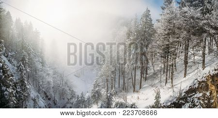 scenic view of mountains and trees in snow near Neuschwanstein Castle, Germany