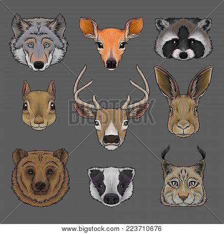 Head of wild animals set, portrait of wolf, doe, raccoon, squirrel, deer, hare, bear, badger and lynx hand drawn vector Illustrations on a grey background