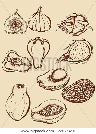set of vintage hand drawn vector tropical fruits poster