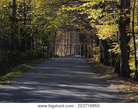 Road drive in desolate forest avenue with two rows of trees sides near city of BIELSKO-BIALA in Poland in 2017 cold autumn sunny day, Europe on November.