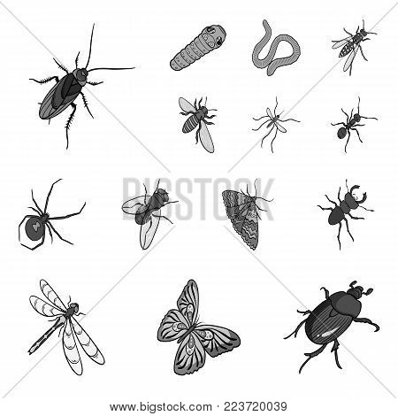 Different kinds of insects monochrome icons in set collection for design. Insect arthropod vector isometric symbol stock  illustration.