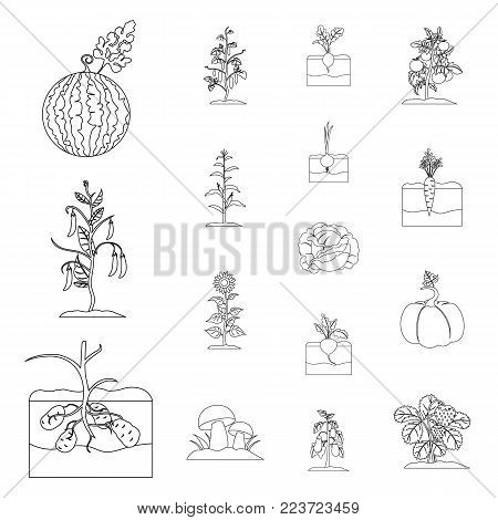 Plant, vegetable outline icons in set collection for design. Garden and harvest vector symbol stock  illustration.