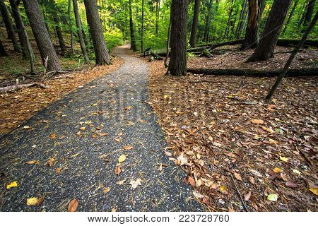 Winding Forest Path Background. Diminishing asphalt path through a lush green forest in Hartwick Pines State Park in Grayling, Michigan.