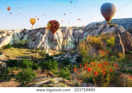Hot air balloon flying over rock landscape at Cappadocia Turkey with flowers and hourses, Goreme