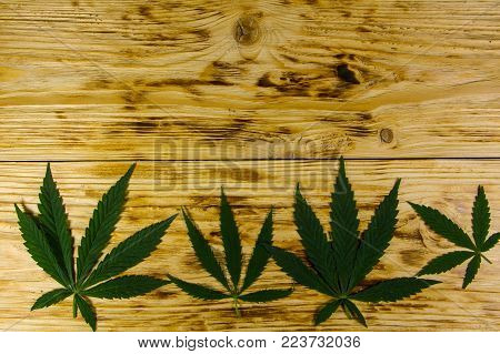Green Cannabis Leaf On Wooden Background