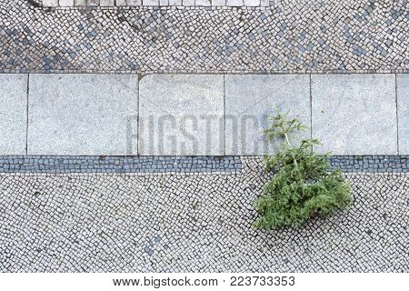 disposed christmas tree from above on cobblestone