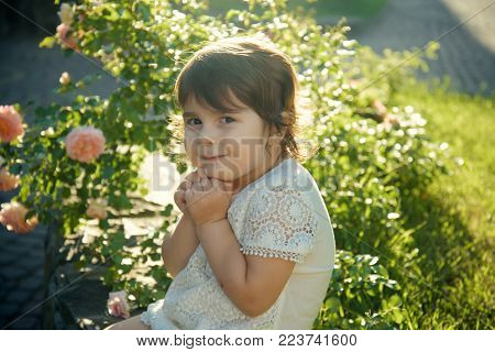 Child Sitting At Blossoming Rose Flowers On Green Grass. Innocence, Purity And Youth Concept. Girl S