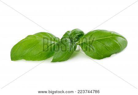 Fresh Green Basil Isolated On White