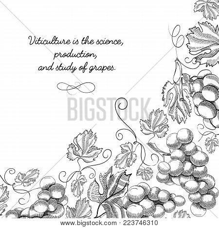 Typography design original card sketch with inscription that viticulture is science, production and study of grapes vector illustration
