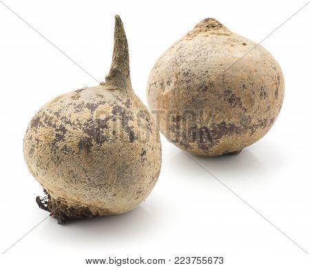Beetroot (red beet) isolated on white background two raw bulbs