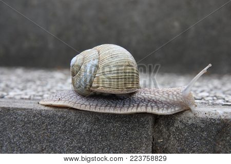 Land snail is the common name for terrestrial gastropod mollusks that have shells