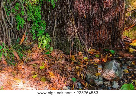 A wall of a mountain with wet vegetation and glares of sunlight and dry leaves lying on the ground in sunny autumn day