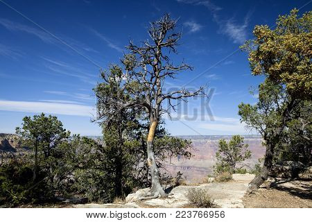 The plants and trees along the trail at the Grand Canyon National Park