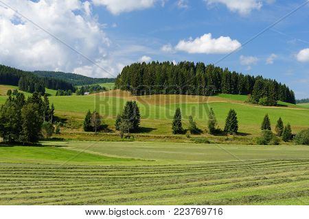 Summer pastoral landscape in Switzerland with forests and meadows