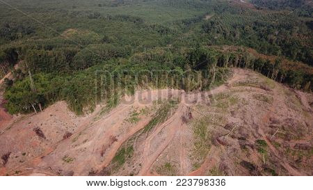 Deforestation of rainforest in Southeast Asia