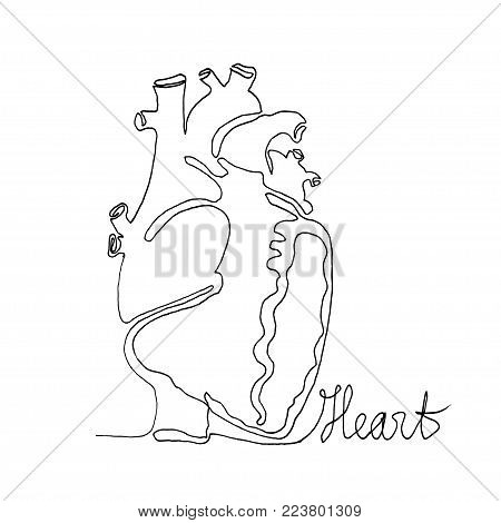 Continuous one line drawing. Anatomy humans heart. Minimalism style. Text Heart. Vector Ink illustration for your design,logo, card, banner, poster, flyer.