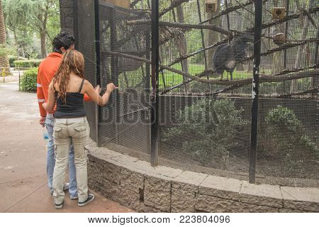 Chapultepec Zoo, Mexico City - October 29, 2009. An anonymous couple of young lovers enjoying a trip to the Chapultepec Zoo in Mexico City.