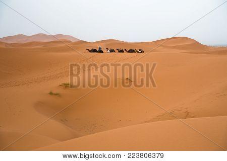 Berber camel caravan in Erg Cheggi before sunrise, Sahara desert, Morocco, Africa