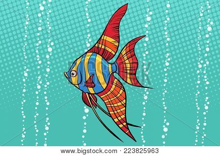 Freshwater angelfish aquarium fish. Pop art retro vector illustration