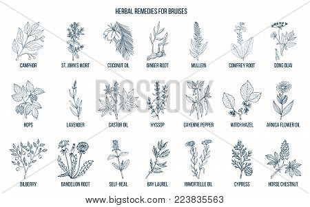 Best herbal remedies to treat bruises. Hand drawn vector set of medicinal plants