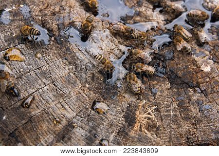 Busy Bees, Close Up View Of The Working Bees On Honeycomb. .