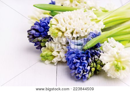 Spring Background with Hyacinths Background with Spring Flowers Bouquet of white and blue hyacinths on a white background Close Up