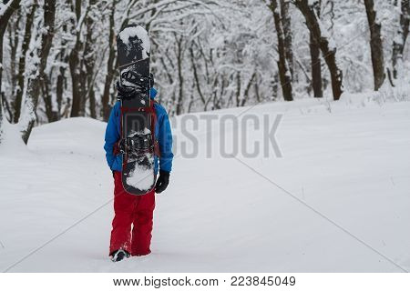 Snowboarder with backpack walks through the forest after snowfall, admiring snow covered trees on the slope - anticipation of adventure. Back view. Adventure in wilderness.