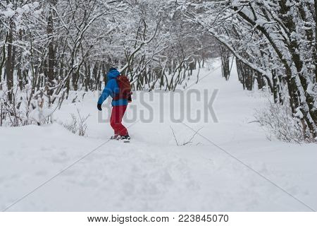 Snowboarder riding along the forest slope, after snowfall, among snow-capped trees - anticipation of adventure. Travel in wilderness. Back view.