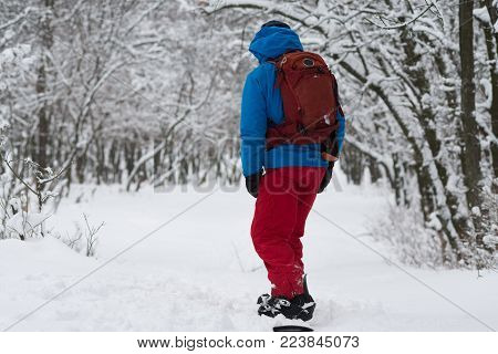 Snowboarder stands on the forest slope, after snowfall, among snow-capped trees - anticipation of adventure. Travel in wilderness. Back view.