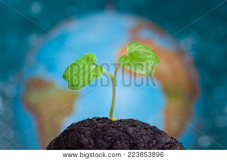 A sprout grows in soil. Our planet Earth is on background. Earth day concept