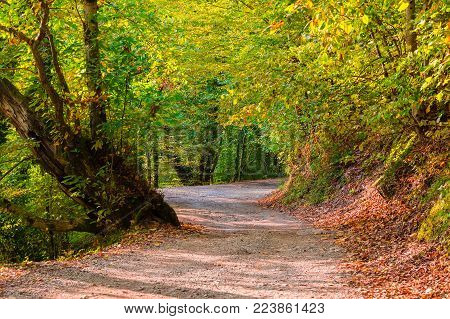 Landscape of a shady mountain trail with dry leaves lying on the ground and varicolored trees in sunny autumn day, Sochi, Russia