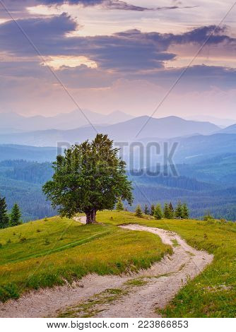 Hill Of One Tree. Mountain Landscape. Lonely Tree Near The Hiking Path. Tourism And The Active Count