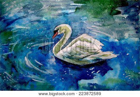 Swan. Floating bird. Watercolor painting. Vector image