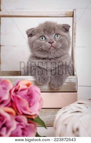 Scottish Fold Cat In Decorative Wooden Box Near Bouquet Of Flowers. Cat At Home. Scottish Fold Cat P