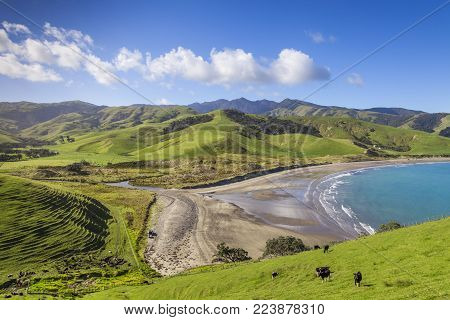 The rolling green hills of the Coromandel Peninsula at Port Jackson, New Zealand.