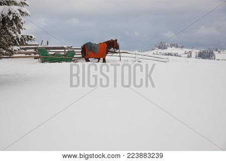 horse drawn sledge in winter in small Romanian village in the Carpathians