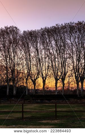 As army soldiers, the trees are lined up watching the sunset