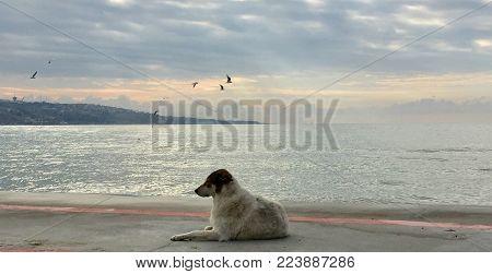 Bir köpeğin kameraya verdiği poz ve deniz manzarası