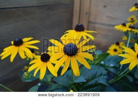 Fotografía de unas flores amarillas en un jardín botánico