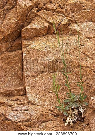 Green Plant Growing Out Of Barren Rock Face In Desert, Struggle/defiance