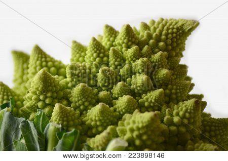 Head of a romanesco cauliflower or romanesque broccoli (Brassica Oleracea, Botrytis cultivar).