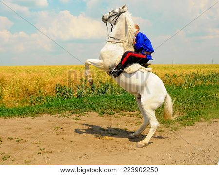 rampant horse with rider on the background of a wheat field