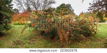 SOCHI, RUSSIA - NOVEMBER 12, 2017: Arboretum - late autumn