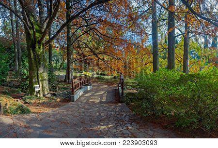 SOCHI, RUSSIA - NOVEMBER 12, 2017: the arboretum-the bridge in the Japanese garden