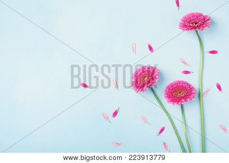 Beautiful spring pink flowers on blue pastel table top view. Floral border. Flat lay style.
