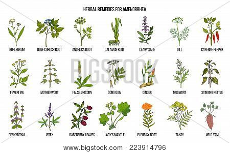 Best herbal remedies to treat amenorrhea. Hand drawn vector set of medicinal plants